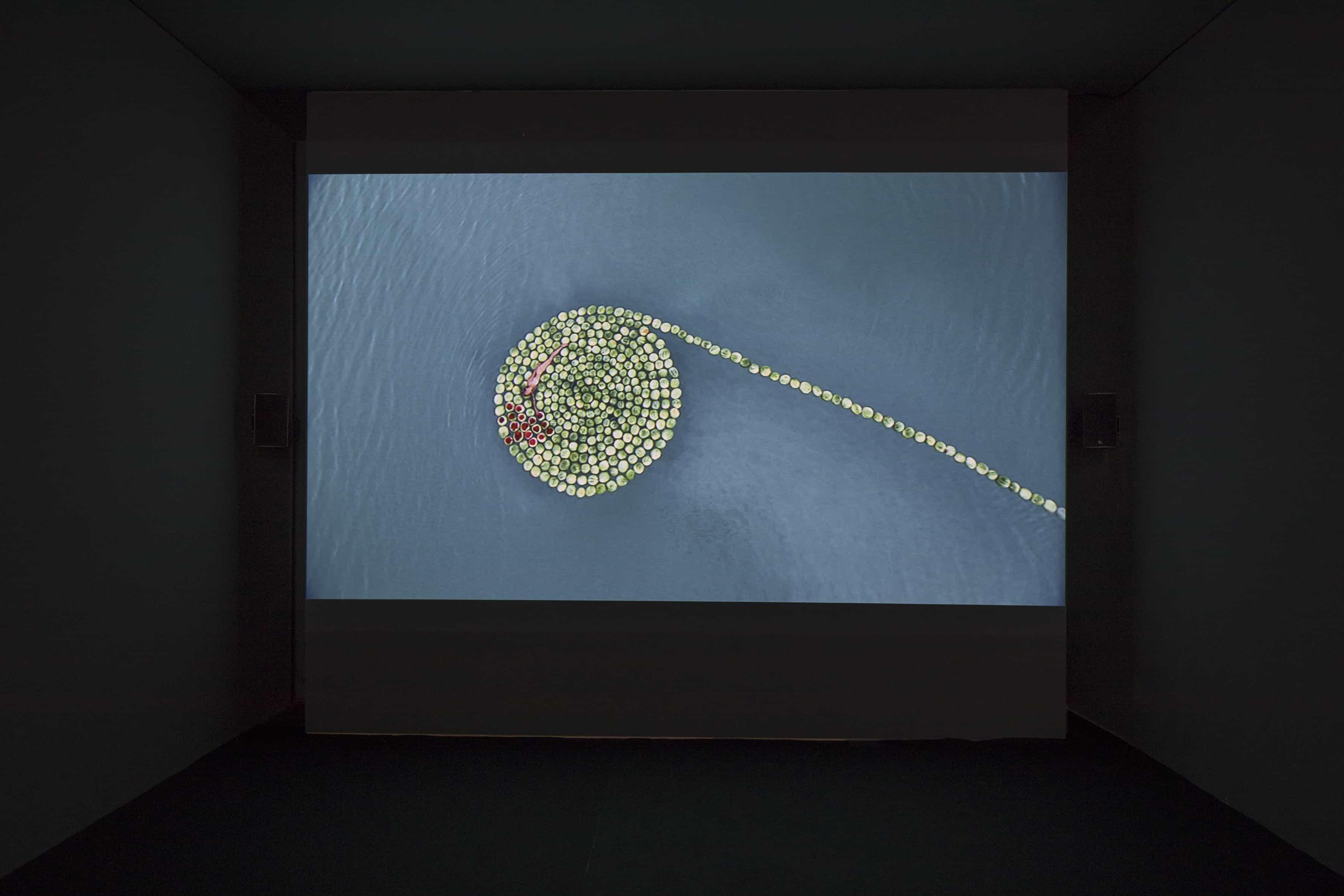 Sigalit Landau, DeadSee, 2005 (ToteSehen), Filmstill